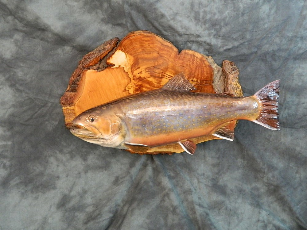 Fish wild wings taxidermy for Wings fish